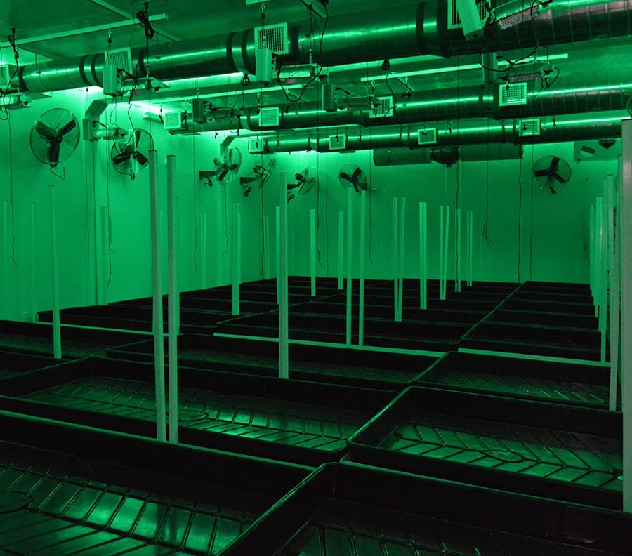 Green lighting included for optimum growing conditions.